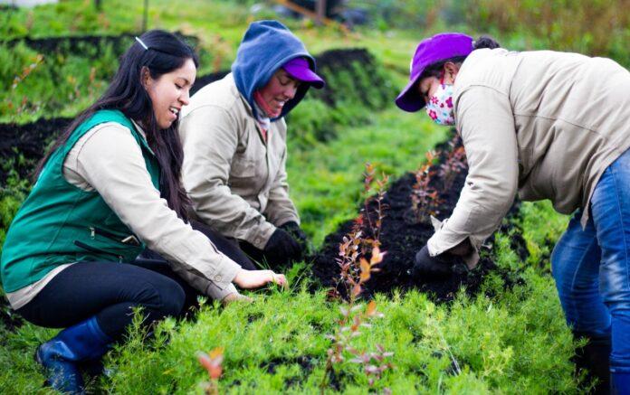 cultivando el futuro del campo